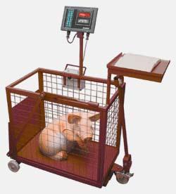 Весы для взвешивания свиней своими руками фото 26